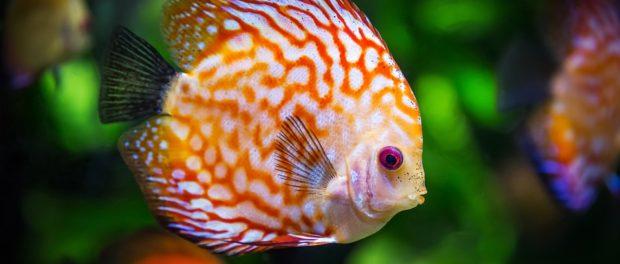 Acquariologia amore per gli animali e design blog for Arredamento acquario